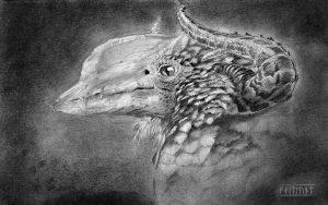 Greater Hornbill Drake
